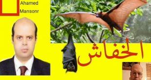 صورة رايت الخفاش في المنام , تفسير حلم الوطواط 6298 3 310x165